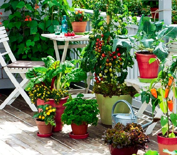 30 Best Images About Kitchen Gardening On Pinterest: Kitchen Gardening For Beginners