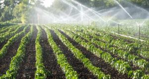 Water Conservation in Arid/dryland Agriculture