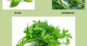 Best Herbs to Grow | Growing Herbs | How to Grow Herbs