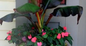 List of Fruits | Container Gardening | Home Garden