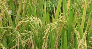 Seasonal and Special Purpose Agriculture Crops