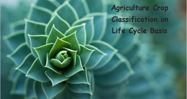 Agriculture Crop Classification on Life Cycle Basis | Arid Agriculture