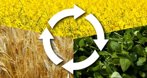 Crop Rotation | Arid Agriculture