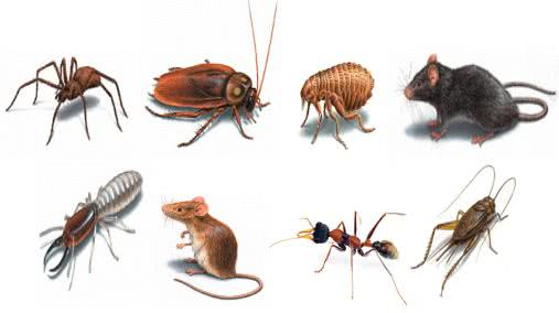 Differences between Insect and Pest | Arid Agriculture