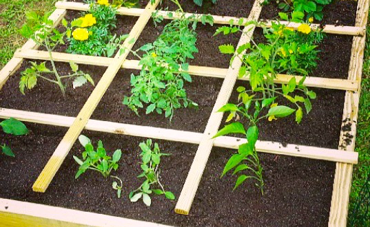 Square Foot Gardening | Arid Agriculture