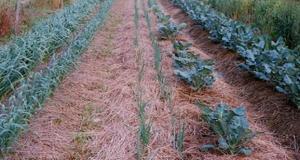 Reducing Soil Evaporation in Arid Agriculture | Arid Agriculture
