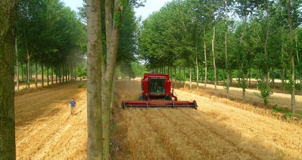 An Introduction and Benefits of Agroforestry   Arid Agriculture