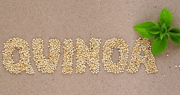 How to Grow Quinoa Seeds in your Kitchen Garden?