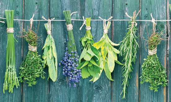 The herbs | spices | best herbs | dry herbs