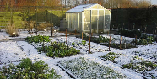 Winter vegetable garden | fall vegetable garden | Arid Agriculture