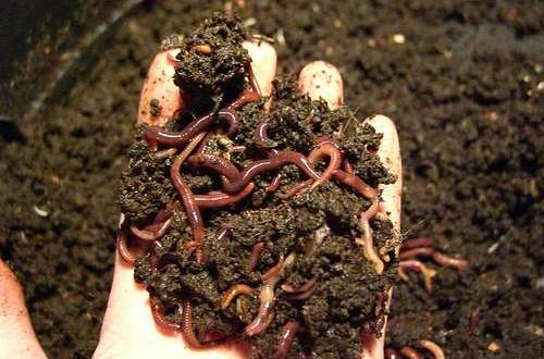Vermicomposting for Vegetable Garden