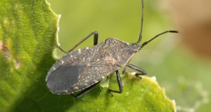 Natural Bug Repellents | Pest Control | Bugs in the garden