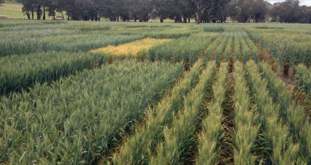 Special Purpose Crops   Arid Agriculture