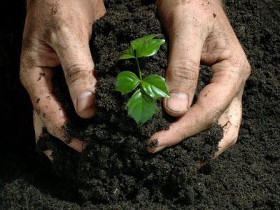 Bio-fertilizers in Agriculture | Arid Agriculture