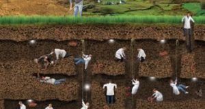 Branches of Soil Science | Arid Agriculture
